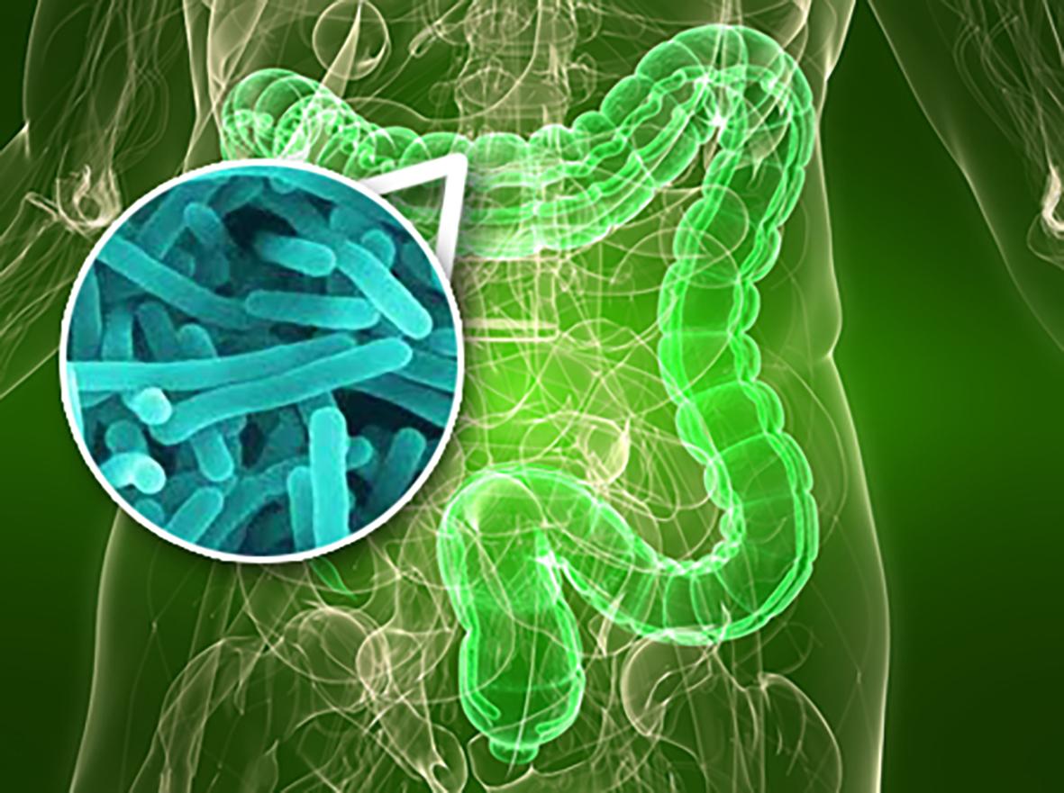 Microbiota Intestinal: Nosso Segundo Cérebro